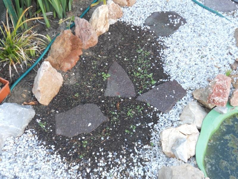 Costruzione del mio giardino.. Dscn2415