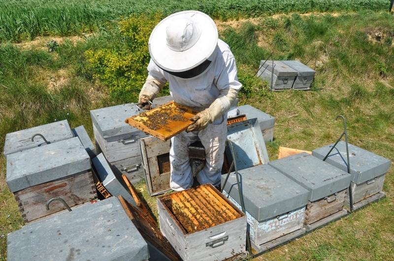 Le rucher de l'ours - Site Web 15081110