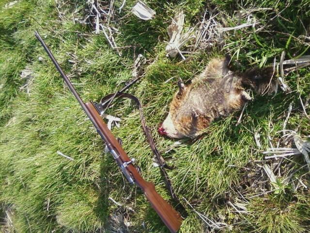 Ground hog hunting Cid_do10