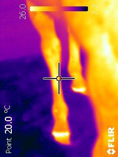 recherche de la photo thermique du cheval 1 pied férré VS 3 sans fer Ir_73310