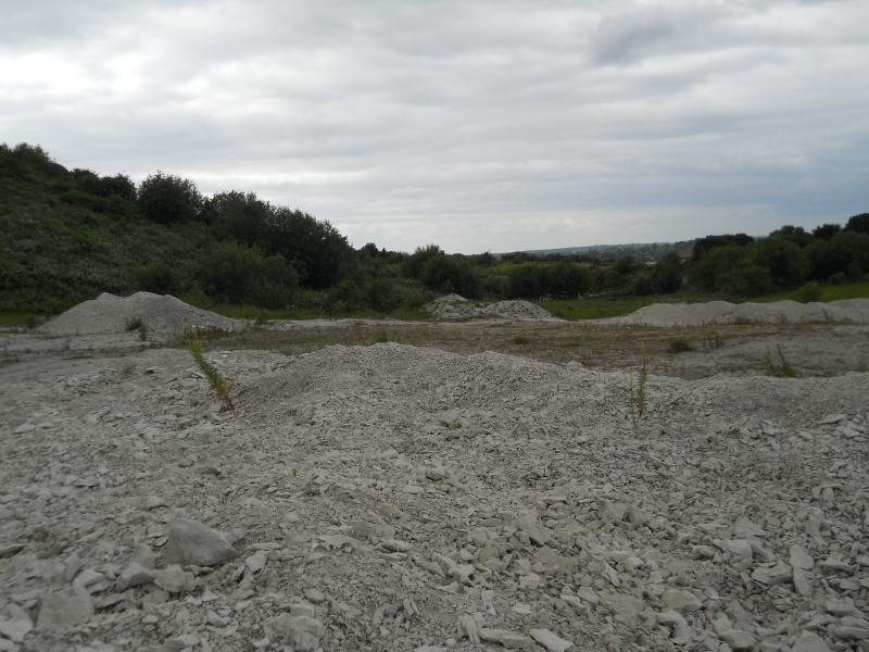 Chalk Fossil Hunt 1st July 00411