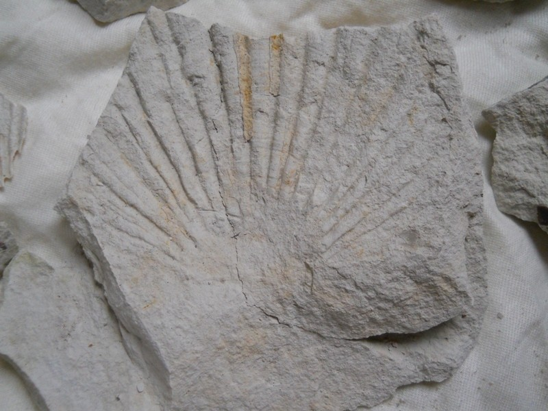 Chalk Fossil Hunt 1st July 004_212