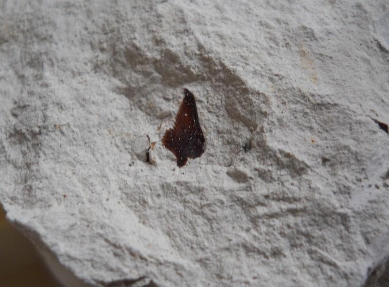 Chalk Fossil Hunt 1st July 02110