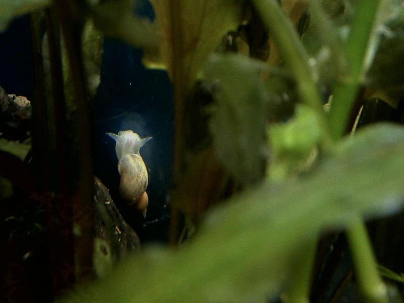 Quel est cet escargot? Escarg10