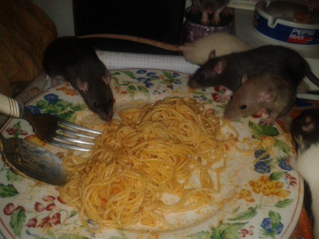 Les Rats-Vageurs de spaghetti  2012-719