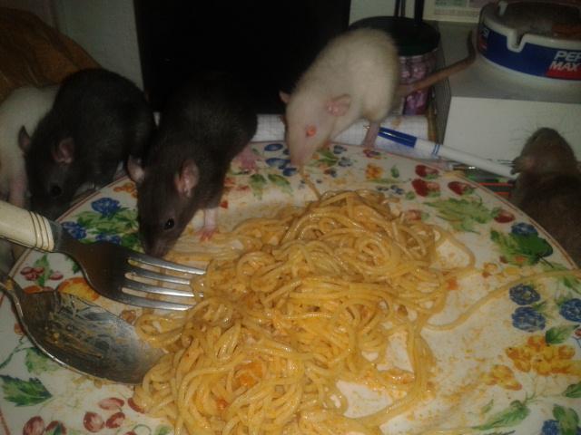 Les Rats-Vageurs de spaghetti  2012-720