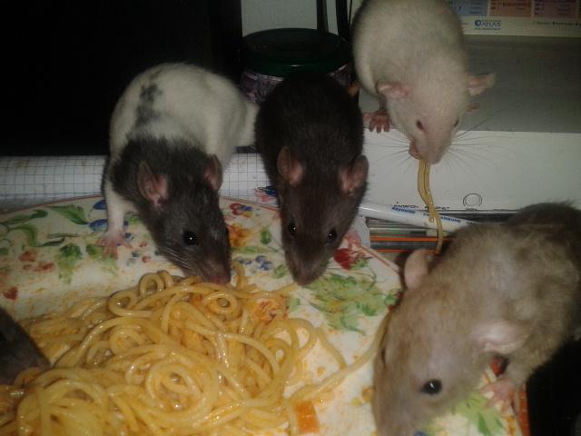 Les Rats-Vageurs de spaghetti  2012-722
