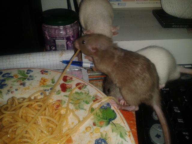 Les Rats-Vageurs de spaghetti  2012-723