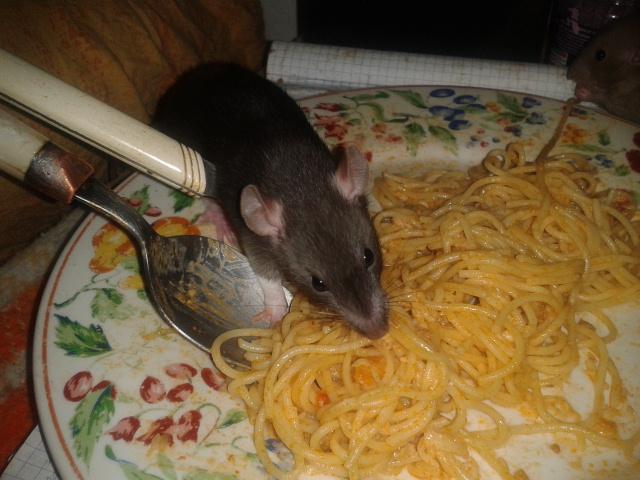 Les Rats-Vageurs de spaghetti  2012-725