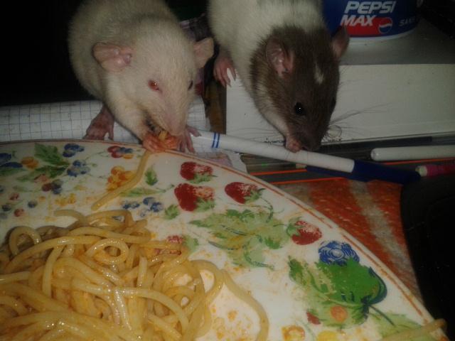 Les Rats-Vageurs de spaghetti  2012-726