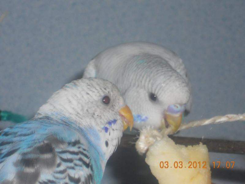 Bulle et Daddou Dscn0915