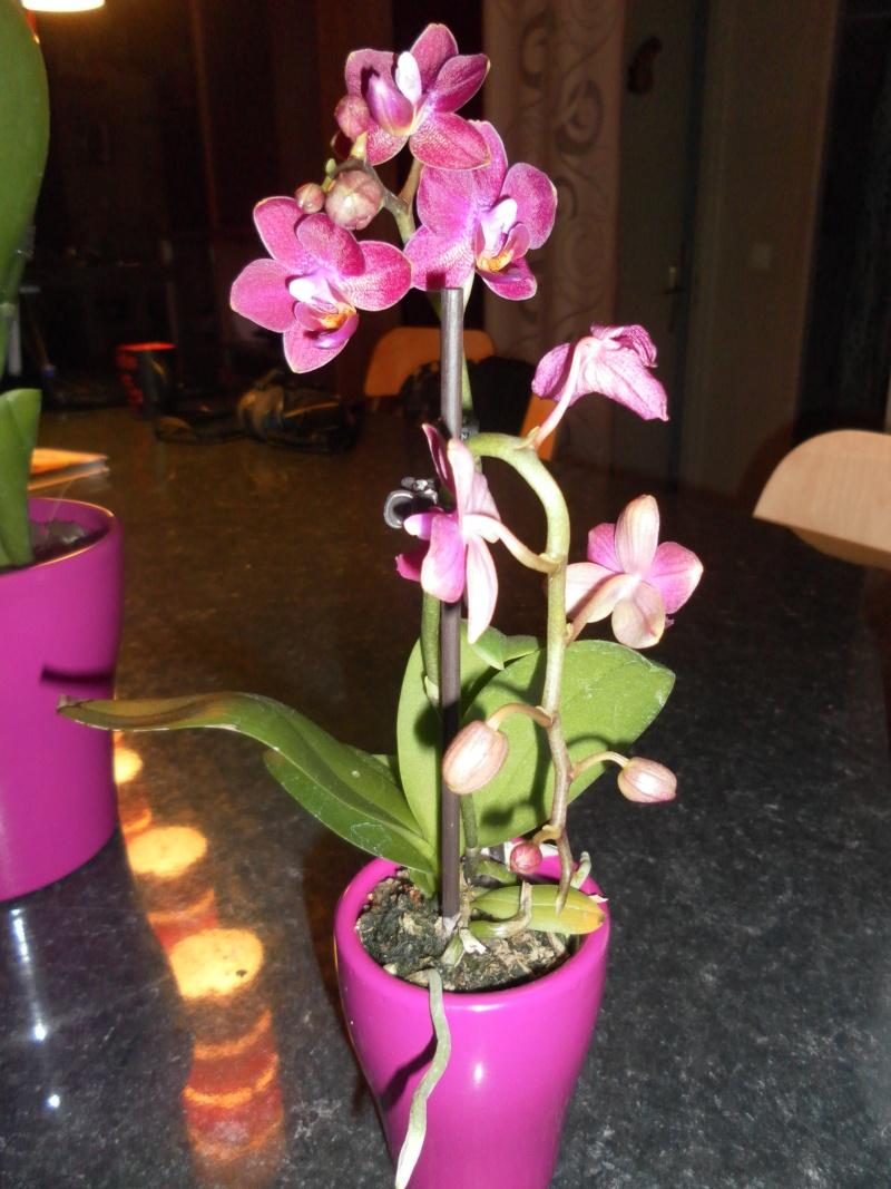 les orchidées de syljou Sam_5314
