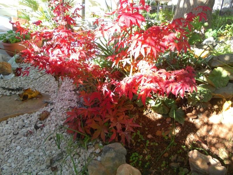 Couleurs d'automne, petit moment d'émerveillement Sam_8022