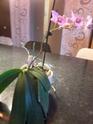les orchidées de syljou Sam_5319