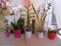 les orchidées de syljou Sam_5323