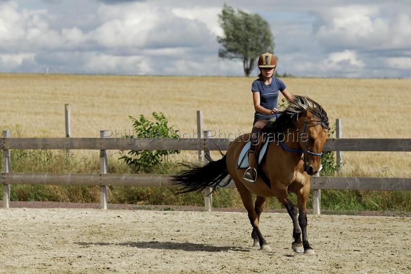 cheval et équitation - NOS expériences personnelles - Page 2 Equita10