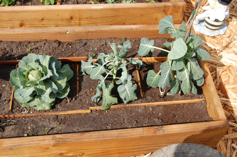 My Garden Adventure, 2012 17_bra11