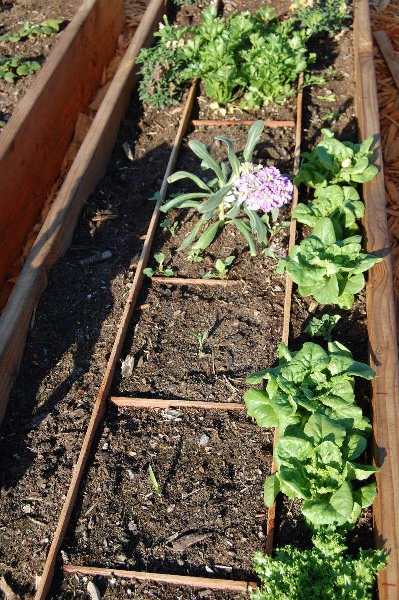 My Garden Adventure, 2012 17_cor10