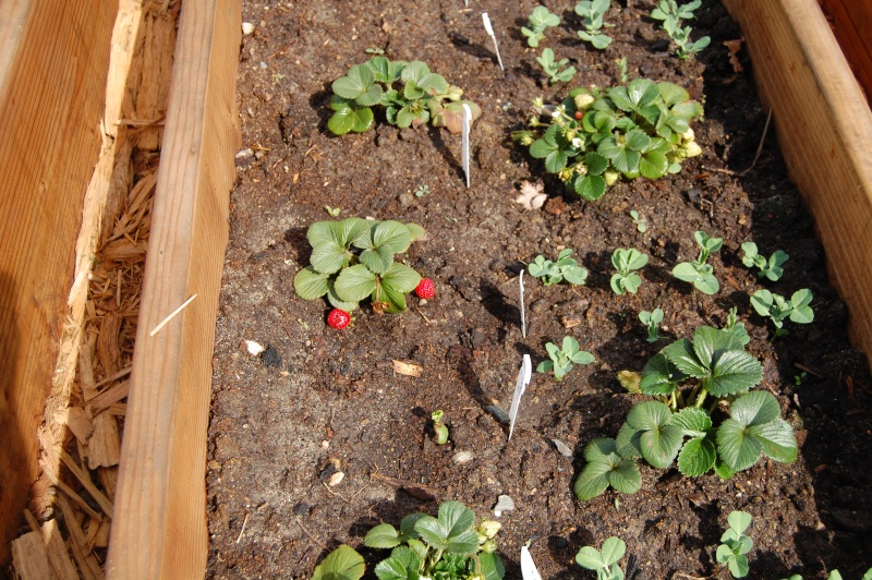 My Garden Adventure, 2012 17_str10