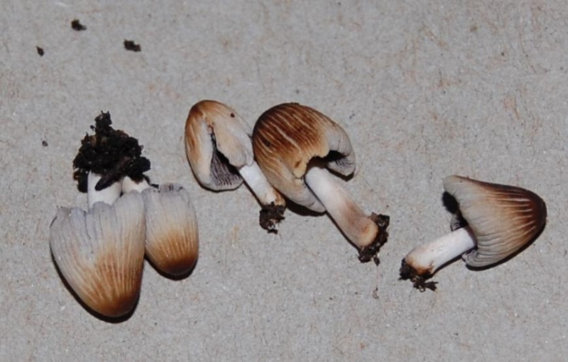Do You Know Your Mushrooms? _pale_10
