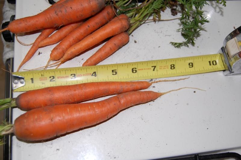 Carrot Week 2012! - Page 14 Dsc_0010
