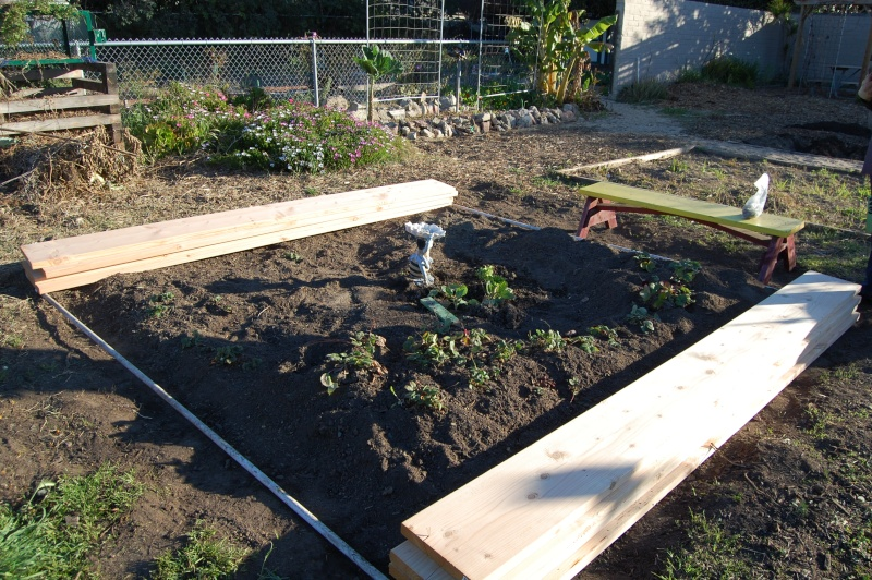My Garden Adventure, 2012 Dsc_3013