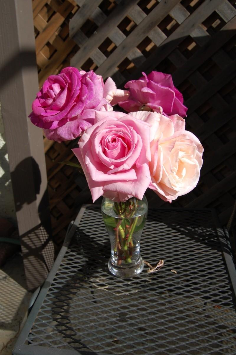 Roses, bulbs--crocus, hyacinth, tulips, etc. Roses_10