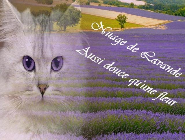 ♥Présentation Nuage de Lavande♥ Sans_t20