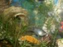 Mon aquarium d'eau douce Sdc14814
