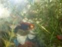 Mon aquarium d'eau douce Sdc14815