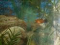 Mon aquarium d'eau douce Sdc14816