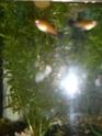 Mon aquarium d'eau douce Sdc14820