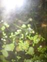 Mon aquarium d'eau douce Sdc14821