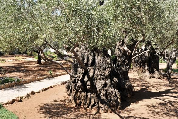 DIE VERTEUFELUNG DES JUDENTUMS IN DER GESCHICHTE Israel10