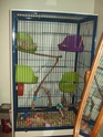 Large cage Dscf1210
