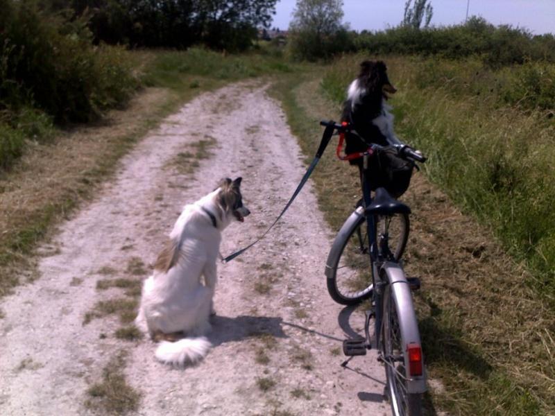 du vélo avec mes chiens V110