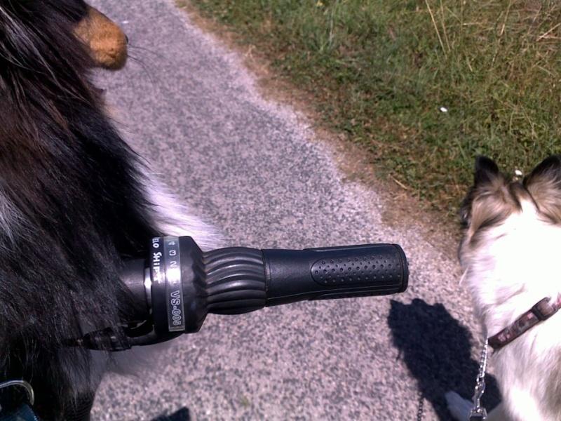 du vélo avec mes chiens V210