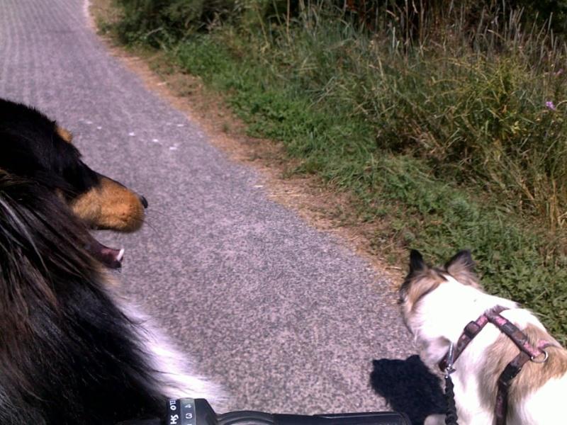 du vélo avec mes chiens V410