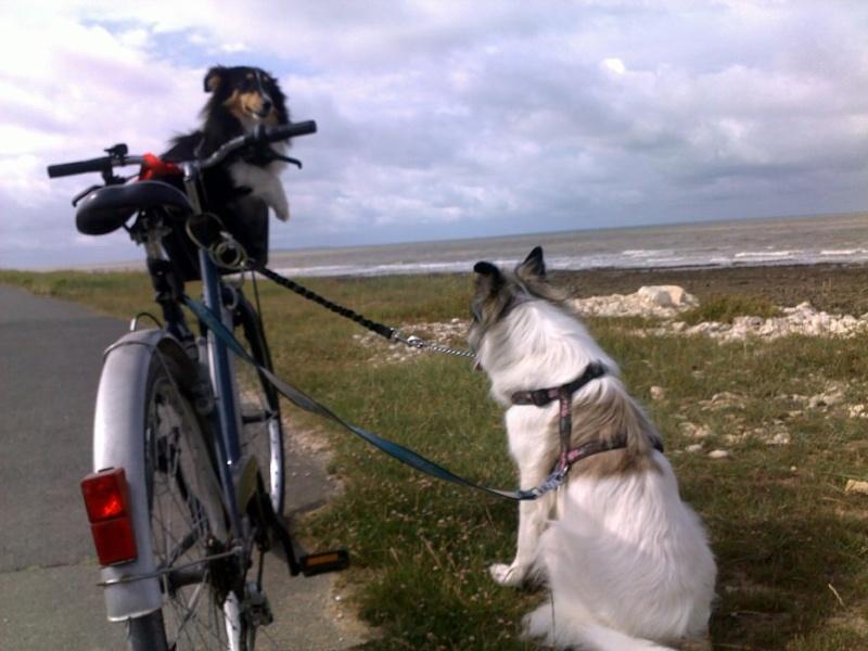 du vélo avec mes chiens V510