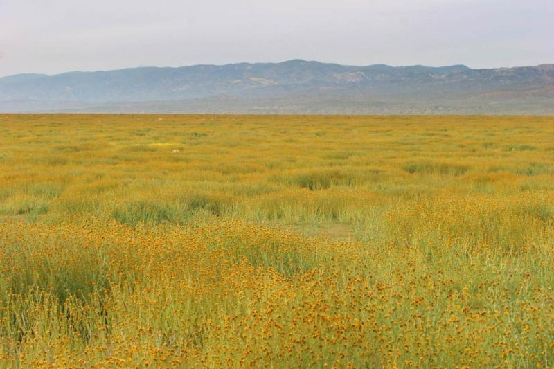 Sunclan Field Img_1210