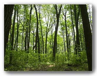 Sunclan Woods Knoxwo10