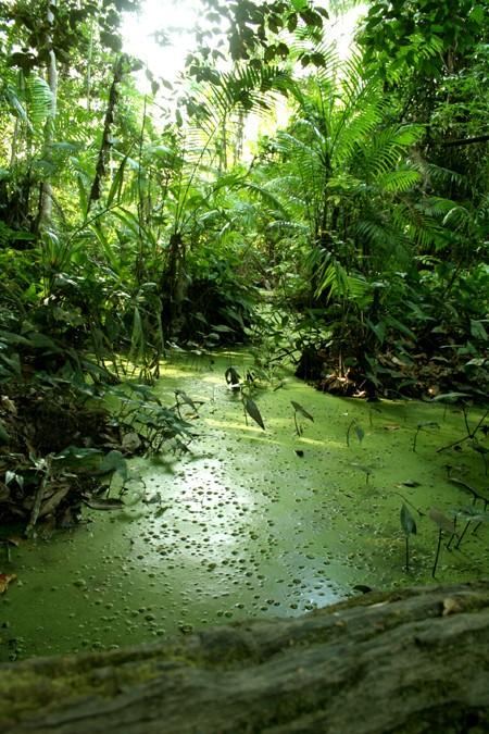 Moonclan Swamp Miasma10