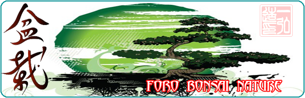 foro bonsai nature - Portal Ip1ra10
