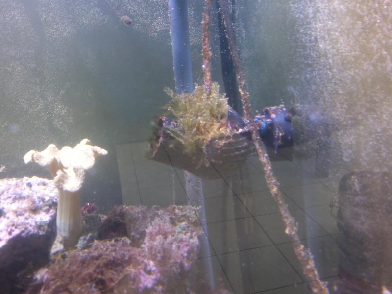 algues  06072013