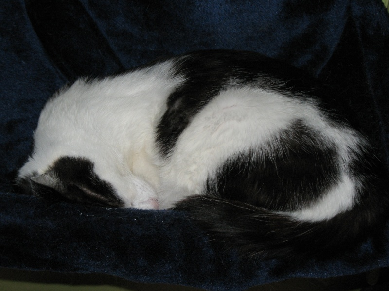 Hamac pour chat 00310