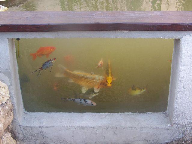 Mon bassin 310