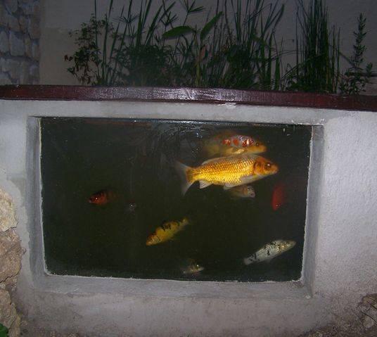 Mon bassin 610