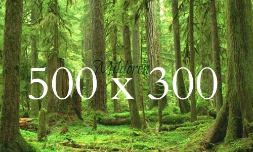 Modelo ficha de relaciones 500x3010