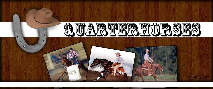 QUARTERHORSES WESTERN - Portal Quarte10