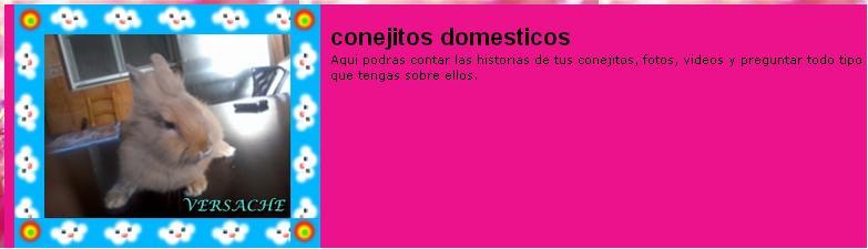 conejitos domesticos Portad10